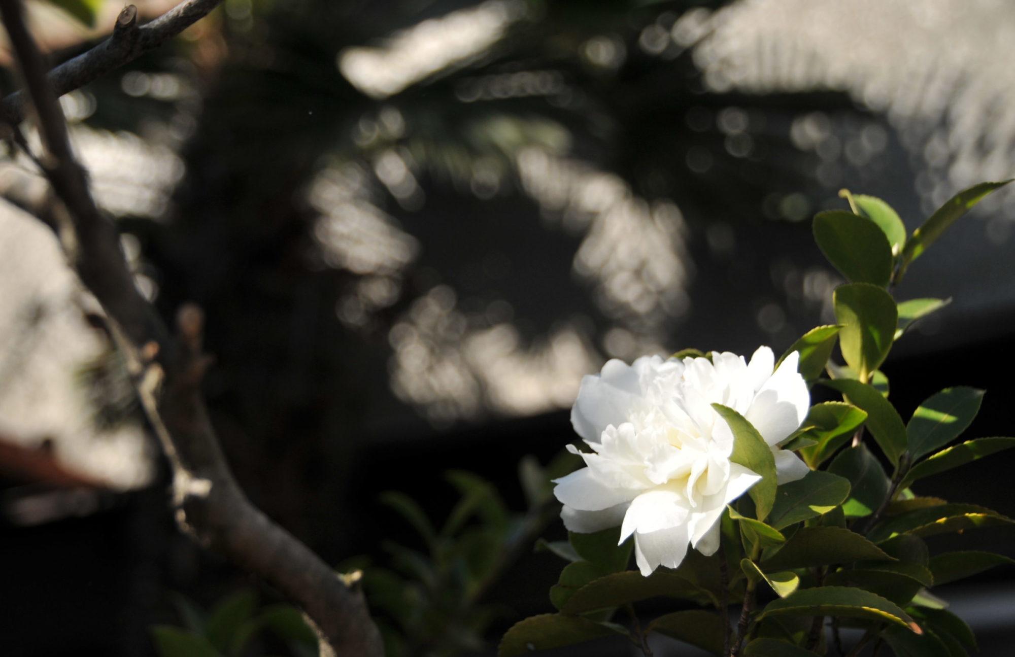 金泉山 清林寺